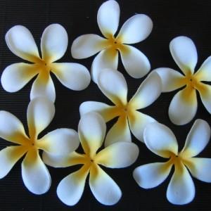 Ivory White frangipani