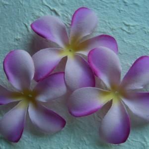 Lilac frangipani