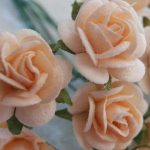 Apricot 15mm roses