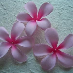 baby pink frangipani