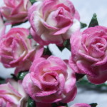 hot pink and white 15mm roses