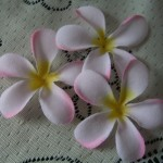 pale pink and white frangipani