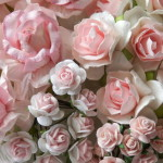 Pink and White mixed roses