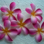 strawberry pink mix frangipani