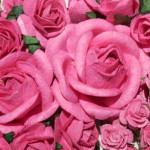 Strawberry Pink mixed roses and rosebuds